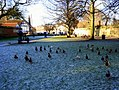 DuckspalaceGreenEly.JPG