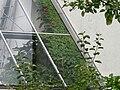 EVA- Lanxmeer Greenhouse11 2009.jpg
