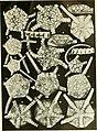 Echinodermata Ophiuroidea (1922) (20950975629).jpg