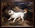 Edwin landseer, ritratto di un terrier di proprietà di owen williams esq. m.p. (jocko con un riccio), 1828 cane 01.jpg