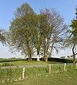 Ehemaliges Naturdenkmal Kastanie im Kreis Soest in Lippetal bei Hultrop an der Straße Auf dem Tigge.JPG