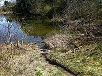 Elchingen - Biberspuren am Vollmersee, Donauaue.jpg
