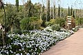 Eleouthkia Traditional and Botanical Park, Cyprus - panoramio (7).jpg