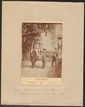 Elephas sumatranus - 1700-1880 - Print - Iconographia Zoologica - Special Collections University of Amsterdam - UBA01 IZ22000141.tif