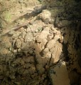 Encroutement algal ou bactérien sur restes de fil de pêche dans la Sèvre niortaise photo F Lamiot 10.jpg