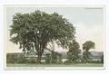 Erksine Park East, Lenox, Mass (NYPL b12647398-75731).tiff
