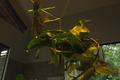 Ervas performáticas - EncontrADA 2016 - Oficina Conexão com as Plantas.png