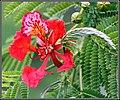 FLOWERS 4 (7348955304).jpg