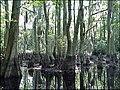 FL swamps (6076700356).jpg