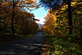 Fall-trees-wv-forest-country-road - West Virginia - ForestWander.jpg