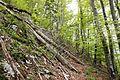 Fallen trees on trail.jpg