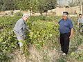 Farmer and Scientist in Vineyard.jpg