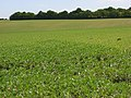 Farmland, Durrington - geograph.org.uk - 453582.jpg