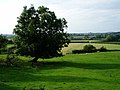 Farmland near Morton Underhill - geograph.org.uk - 571005.jpg