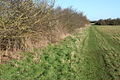 Field boundary west of Moat's Way Farm - geograph.org.uk - 679717.jpg