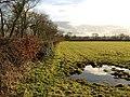 Field by Red Lane - geograph.org.uk - 1680005.jpg