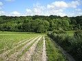 Fields and wood near Wylye 3 - geograph.org.uk - 481586.jpg