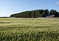 Fields near Atlantic coast - Norway - panoramio.jpg