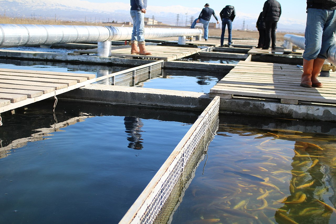 File fish farm in sipanik ararat marz for Wisconsin fish farms