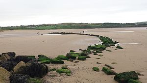 Fishing weir - Image: Fish weir, Lligwy beach