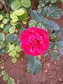 Fleurs de Jardin (6).jpg