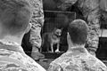 Flickr - DVIDSHUB - Operation Puppy Move (Image 2 of 6).jpg