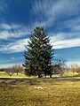 Flickr - Nicholas T - Louise W. Moore Park (2).jpg