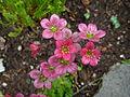 Flickr - brewbooks - Our Garden - May, 2008 (7).jpg