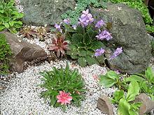 parterre de fleurs avec cailloux
