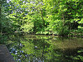 Flickr - ronsaunders47 - BIRCHWOOD POND. WARRINGTON CHESHIRE UK..jpg