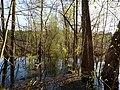 Flooded path in the Teufelsbruch swamp 26.jpg