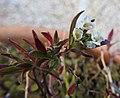 Flower (27999067735).jpg