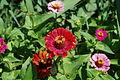 Flower 106 (9443365099).jpg