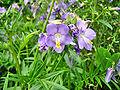 Flower Rex 16.jpg