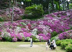 Flower garden of Daikouzenji 01.JPG