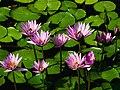 Flower show10.jpg