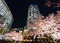 Flower viewing event in Tokyo, Japan; April 2014 (06).jpg