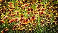 Flowers (84587479).jpeg