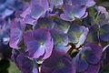 Flowers 4 - West Virginia - ForestWander.jpg