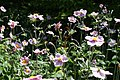 Flowers at Ventnor Botanic Garden in August 2011 9.JPG
