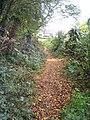 Footpath on the edge of Jew's Wood Plymstock - geograph.org.uk - 1556398.jpg