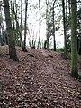 Footpath through Pigney's Wood - geograph.org.uk - 1020647.jpg