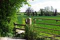 Footpath through the wheat - geograph.org.uk - 405193.jpg