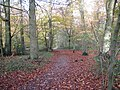 Footpath through the woods to Beacon Hill - geograph.org.uk - 1588832.jpg