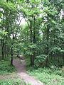Forêt de Buzet 2014-05-08T13-51-43.jpg