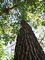 Forêt de la Coubre 031.jpg