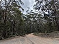 Forbes Creek Road at Forbes Creek and Palerang, New South Wales.jpg