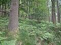 Forest003.jpg