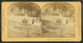 Forest Hills cemetery, Boston, Mass, by Littleton View Co..png