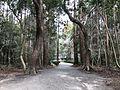 Forest in Miyazaki Shrine 3.jpg